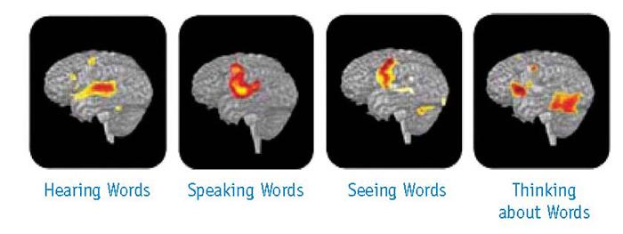 thinking-brain_75837_3